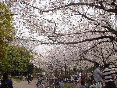 桜の下で1.jpg
