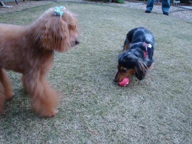 Ginger's Friends3.jpg