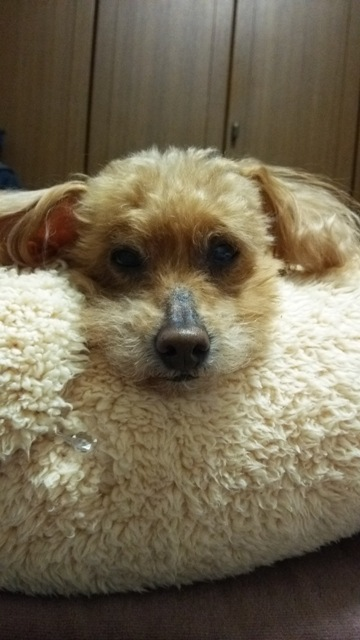 Ginger14歳2.jpg