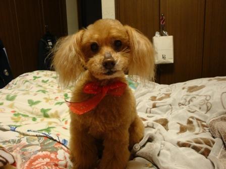Ginger20160319.JPG